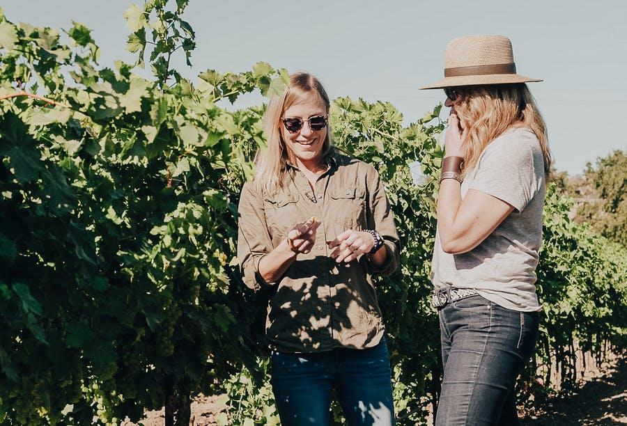 Scout and Cellar organic, clean crafted wine low sulfites